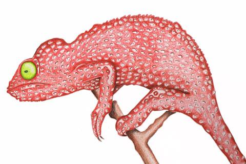 chameleon_small